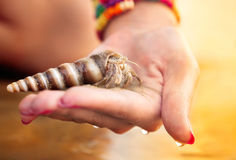 Woman holding maxillopod. Small alive soldier crab on the hand in sunset colors royalty free stock photography
