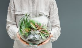 Home gardening hobby concept, with copy space. Woman holding mini succulent garden in glass florarium vase. Home gardening hobby concept, copy space royalty free stock image