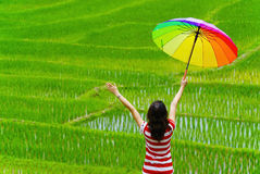 Woman Holding multicolor umbrella in rice field Stock Photos
