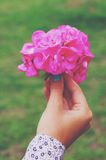 Woman holding pink hydrangea flower bouquet in her hand Royalty Free Stock Images