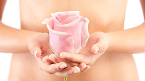 Woman holding a pink rose Royalty Free Stock Photo