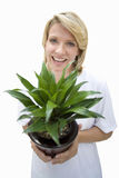 woman holding plant, cut out Stock Photos