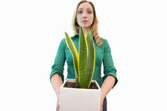 woman holding plant, cut out Stock Images