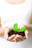 Woman holding plant in dirt Stock Photos