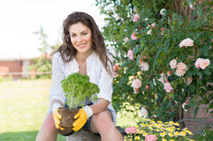 Woman Holding Plant While Gardening Royalty Free Stock Images