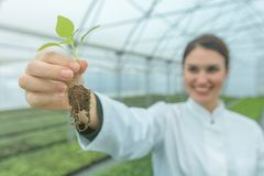 Woman holding plant in greenhouse nursery. Seedlings Greenhouse. Agriculture Stock Photo