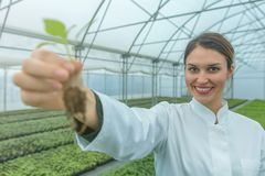 Woman holding plant in greenhouse nursery. Seedlings Greenhouse. Agriculture Royalty Free Stock Photo