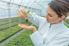 Woman holding plant in greenhouse nursery. Seedlings Greenhouse. Agriculture Royalty Free Stock Images