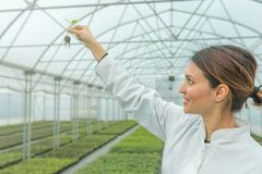 Woman holding plant in greenhouse nursery. Seedlings Greenhouse. Agriculture Royalty Free Stock Image