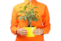 Woman holding a plant Royalty Free Stock Photos
