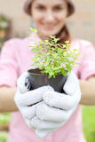 woman holding plant pot Royalty Free Stock Photo