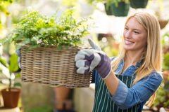 Woman holding plant in wicker basket at greenhouse Royalty Free Stock Images