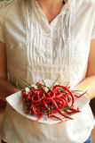 Woman holding plate of fresh red chili peppers Royalty Free Stock Image