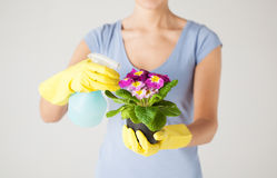 Woman holding pot with flower and spray bottle Stock Images