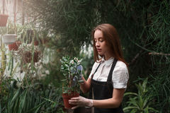 Woman holding a pot with houseplant in hands Stock Photo