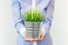 Woman holding pot with start up Stock Image