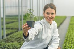 Woman holding potted plant in greenhouse nursery. Seedlings Gree. Nhouse. Agriculture Royalty Free Stock Photo