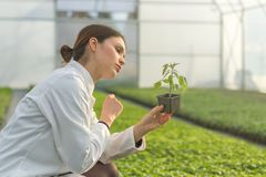 Woman holding potted plant in greenhouse nursery. Seedlings Gree. Nhouse. Agriculture Royalty Free Stock Photos