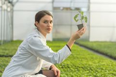 Woman holding potted plant in greenhouse nursery. Seedlings Gree. Nhouse. Agriculture Stock Images