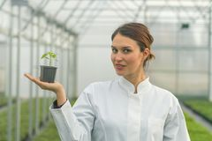 Woman holding potted plant in greenhouse nursery. Seedlings. Greenhouse. Agriculture Royalty Free Stock Photos