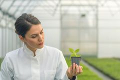 Woman holding potted plant in greenhouse nursery. Seedlings. Greenhouse. Agriculture Stock Images