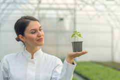 Woman holding potted plant in greenhouse nursery. Seedlings. Greenhouse. Agriculture Royalty Free Stock Photo