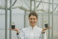 Woman holding potted plant in greenhouse nursery. Seedlings. Greenhouse. Agriculture Royalty Free Stock Photography