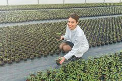 Woman holding potted plant in greenhouse nursery. Seedlings. Greenhouse. Agriculture Stock Photos