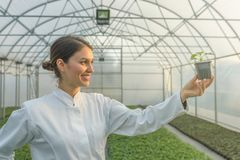 Woman holding potted plant in greenhouse nursery. Seedlings. Greenhouse. Agriculture Royalty Free Stock Image