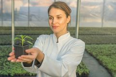 Woman holding potted plant in greenhouse nursery. Seedlings. Greenhouse. Agriculture Royalty Free Stock Images