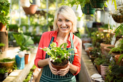 Woman holding potted plant at greenhouse Royalty Free Stock Photography