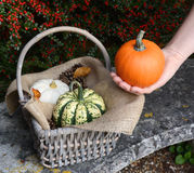 Woman holding pumpkin in her hand with basket of gourds Stock Photography