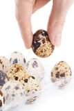 Woman holding a quail egg. Woman picking a quail egg - selecting best product concept Stock Photo
