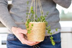 Woman holding a rare succulent plant in a DIY hanging twine pot, close up, wearing jeans and knitwear royalty free stock photos