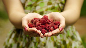 Woman holding a red raspberries Royalty Free Stock Photo