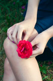 Woman holding a red rose flower on her lap Royalty Free Stock Image