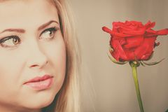 Woman holding red rose near face looking melancholic. Romance, valentine day gifts concept. Beautiful blonde young woman holding red rose near face looking Royalty Free Stock Image