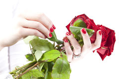 Woman holding red roses. GN. Woman holding a bouquet with red roses on valentines day. GN royalty free stock photo