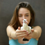 Woman holding a rescue baby pigeon. Stock Photos