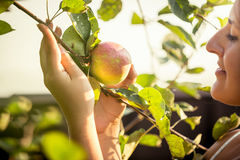 Woman holding ripe apple with care at garden Stock Photography