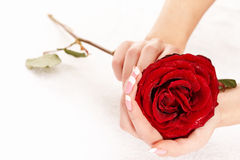 Woman Holding Rose Royalty Free Stock Images