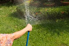 Woman holding rubber water hose watering garden. On summer royalty free stock photo