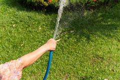 Woman holding rubber water hose watering garden. On summer stock photos