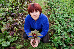 Woman holding a seedling in her hands. Adult caucasian woman surrounded by green field and looking up while holding a seedling in her hands stock photography
