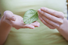 Woman holding small green leaf Royalty Free Stock Photography