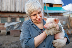 Woman holding a small pig Royalty Free Stock Photos