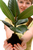 Woman is holding small tree in the hands Stock Photo