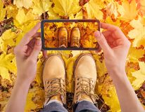 Woman holding smartphone taking photo of yellow leafs. In autumn park Stock Images