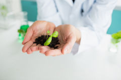 Woman holding soil and plants Stock Photo