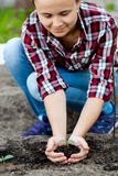 Woman is holding soil and young plant in hands. Stock Image
